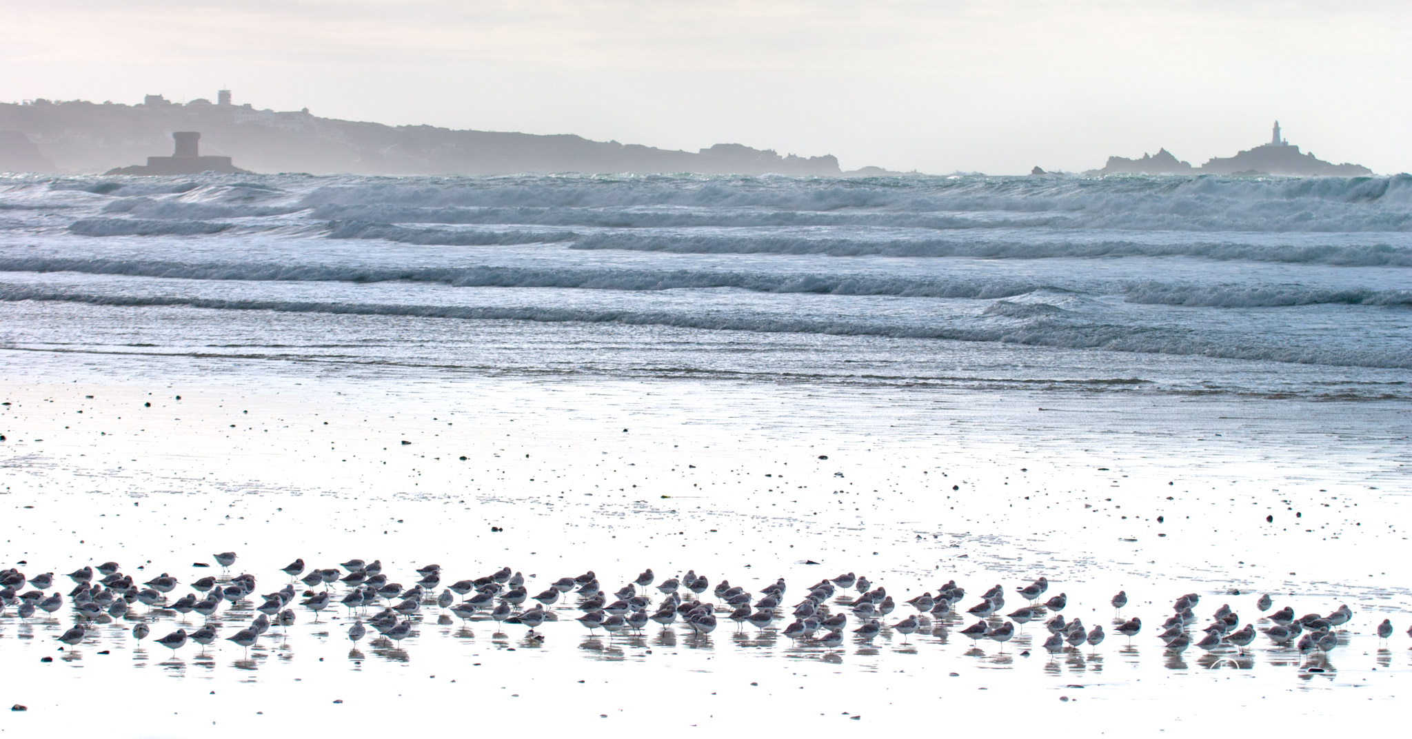 Beach and lively breaking waves with birds in the foreground and lighthouse on the horizon